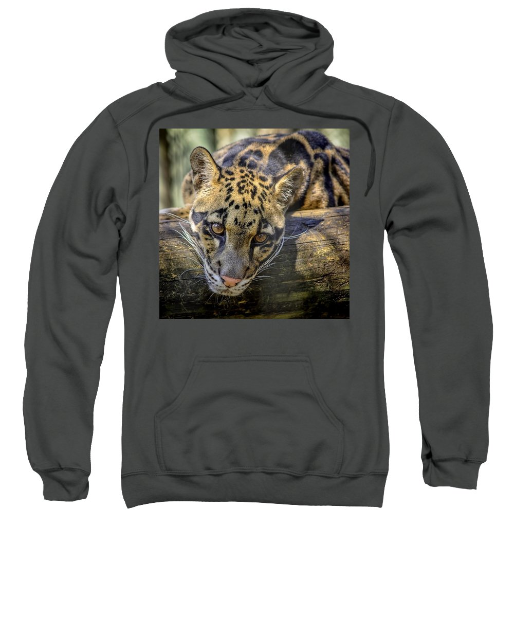 Clouded Leopard Sweatshirt featuring the photograph Clouded Leopard by Steven Sparks