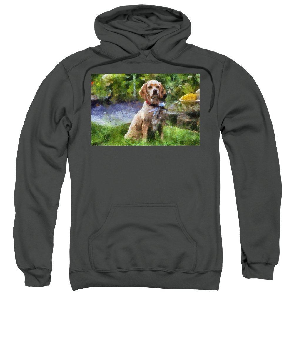 Spaniel Sweatshirt featuring the photograph Cocker Spaniel Outside 04 by Thomas Woolworth