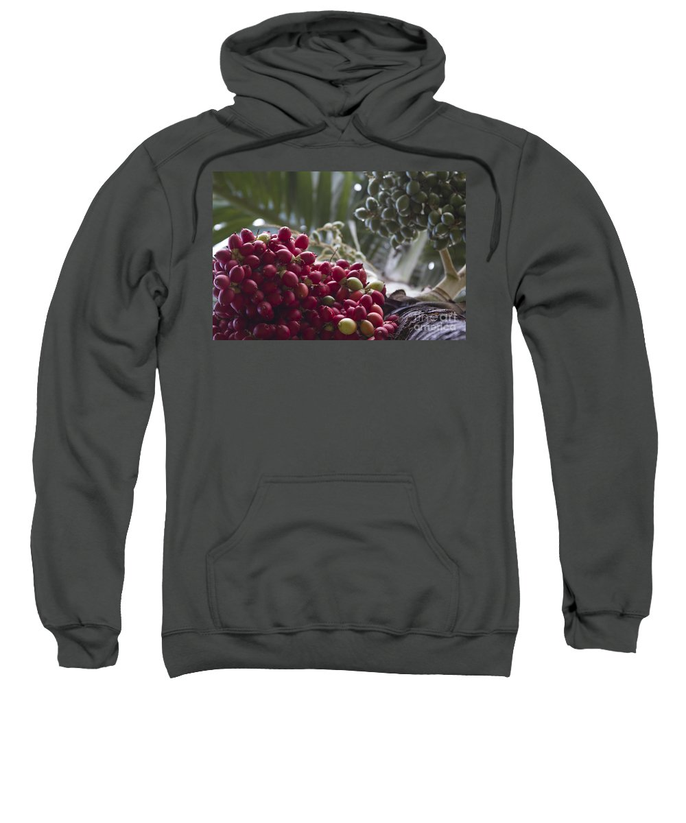 Aloha Sweatshirt featuring the photograph Cocos Nucifera - Niu Mikihilina - Palma - Niu - Arecaceae - Palmae by Sharon Mau