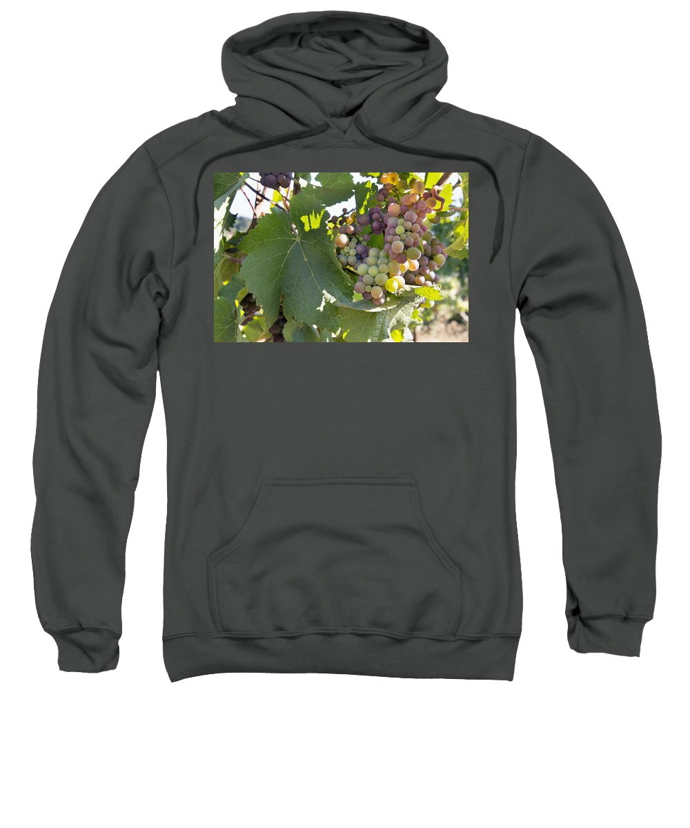 Grapes Sweatshirt featuring the photograph Colorful Grapes Growing On Grapevine by Jit Lim