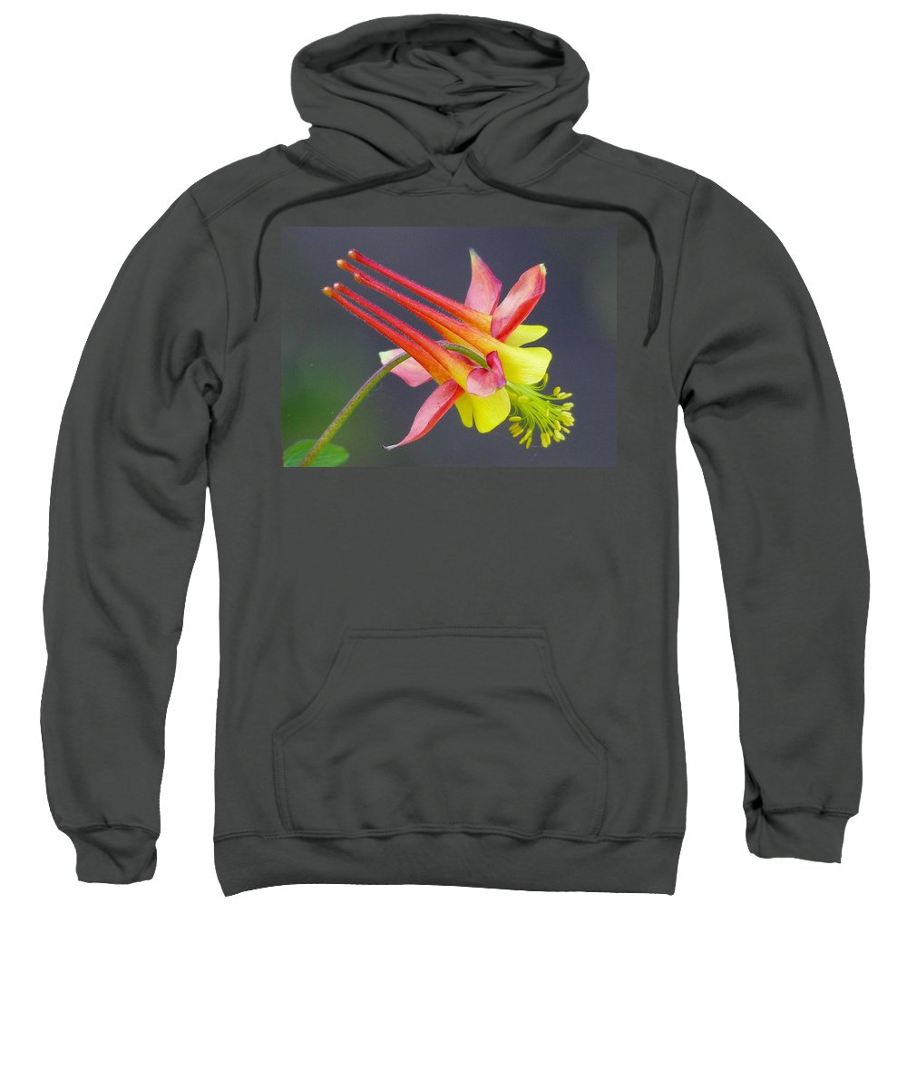 Outdoors Sweatshirt featuring the photograph Columbine by Charles Ford