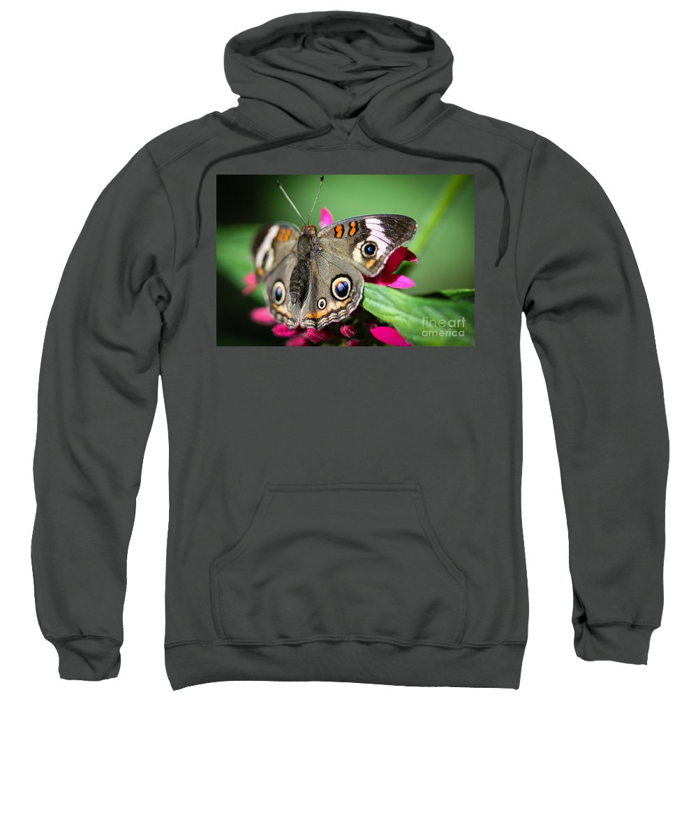 Butterfly Sweatshirt featuring the photograph Common Buckeye Junonia Coenia by Henrik Lehnerer