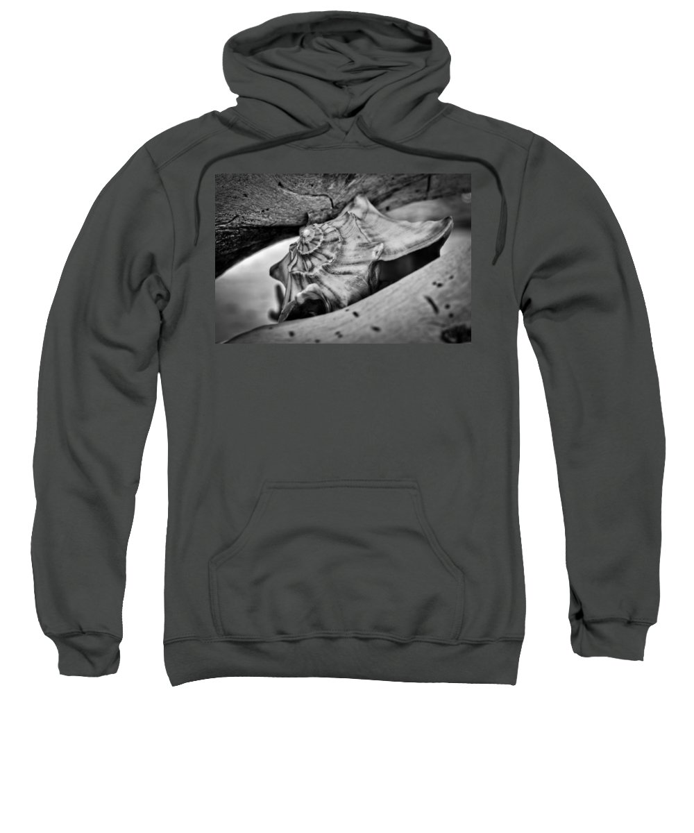 Conch Sweatshirt featuring the photograph Conch Shell Two by Andrew Crispi