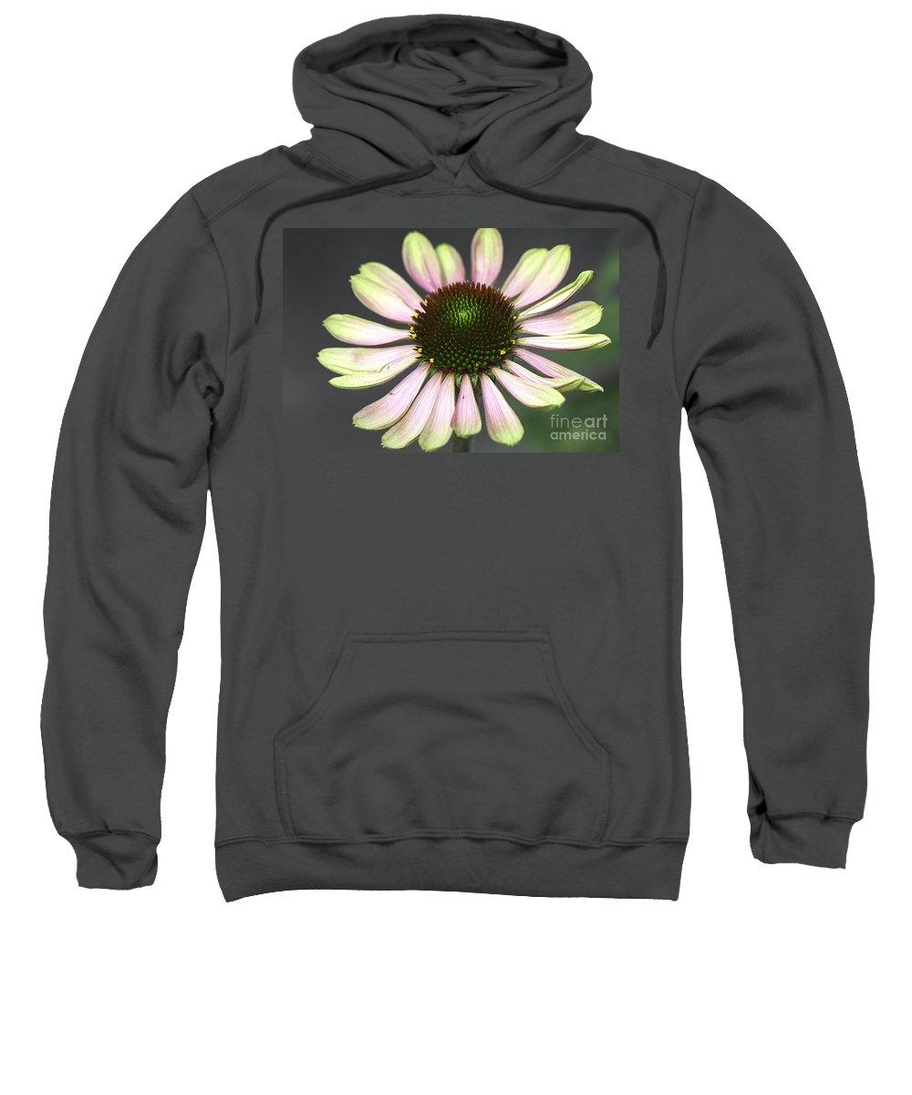 Flower Sweatshirt featuring the photograph Cone Display by Deborah Benoit