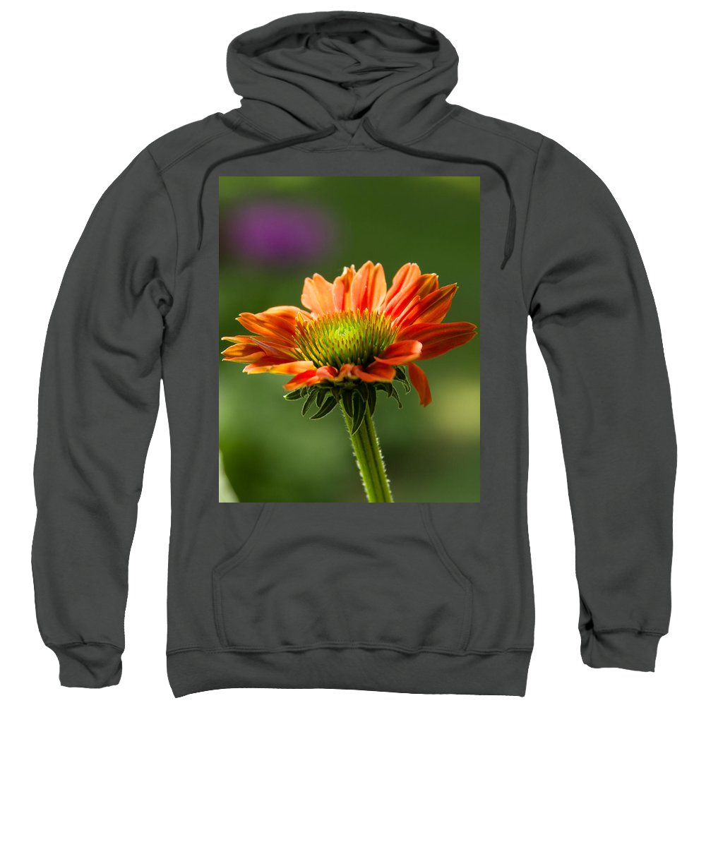 Cone Sweatshirt featuring the photograph Cone Flower by Brian Caldwell