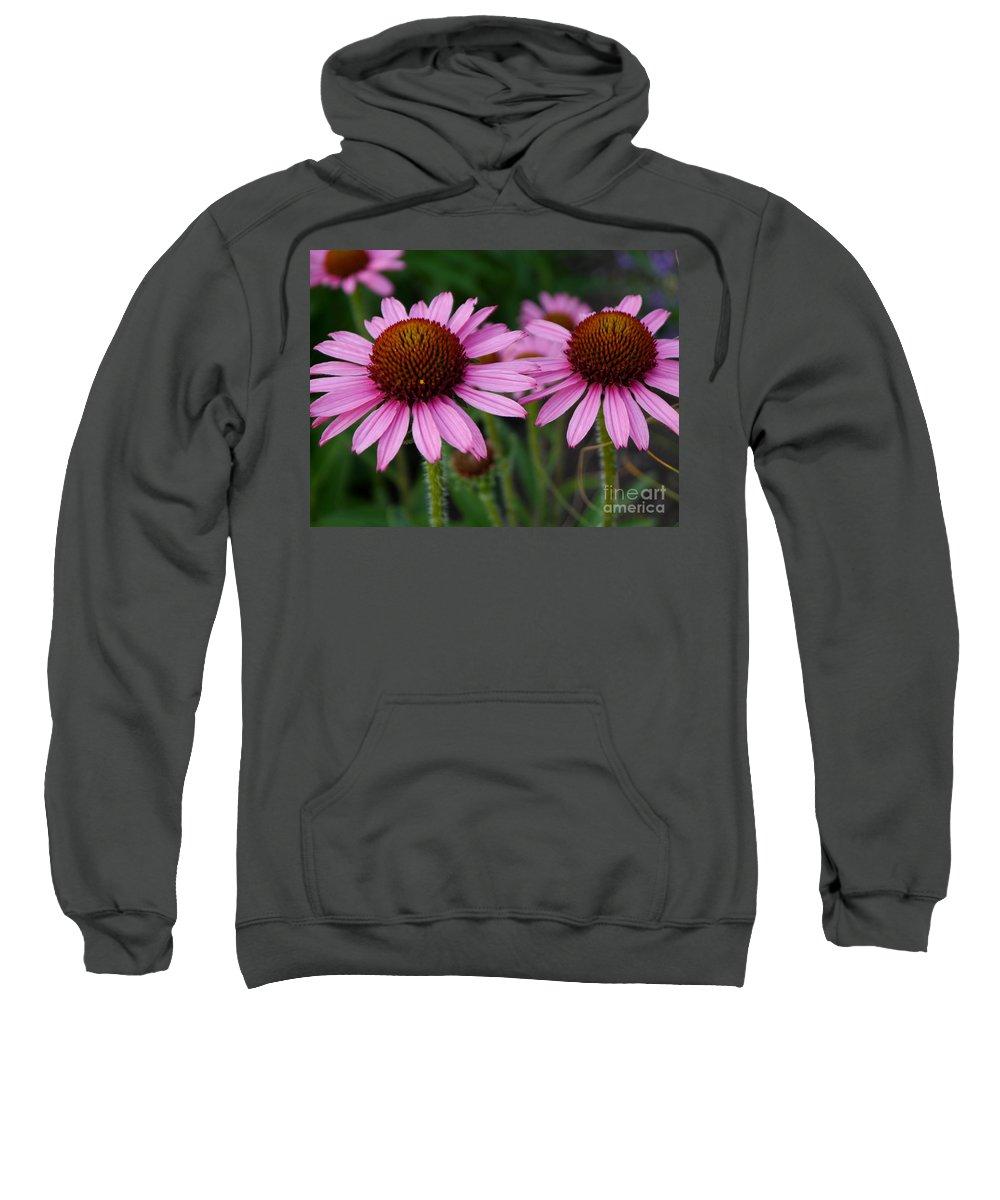 Conflower Sweatshirt featuring the photograph Coneflowers - Echinacea Purpurea by Christiane Schulze Art And Photography