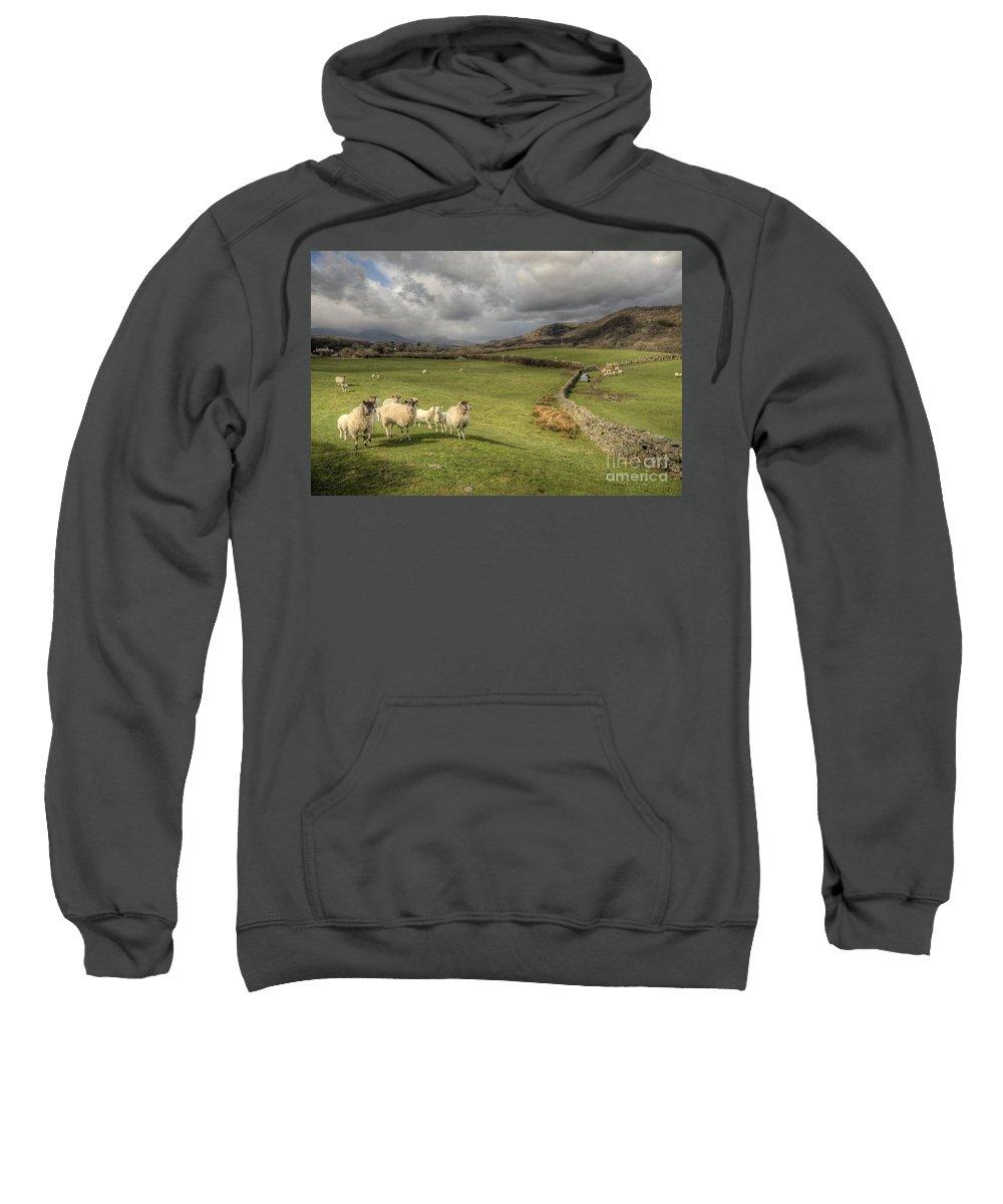 Lake Sweatshirt featuring the photograph Coniston Sheep by Rob Hawkins