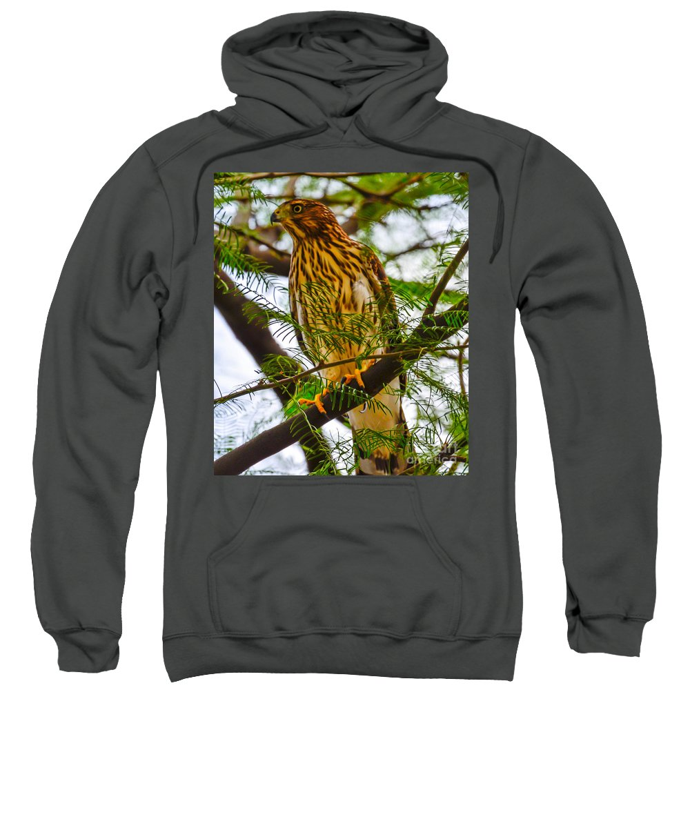 Hawk Sweatshirt featuring the photograph Cooper's Hawk by Michael Moriarty