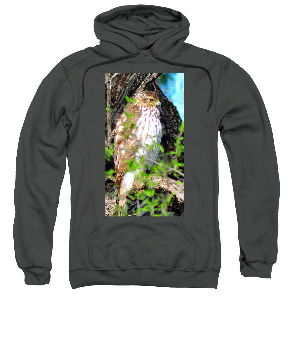 Hawks Sweatshirt featuring the photograph Cooper's Hawk by Shannon Harrington
