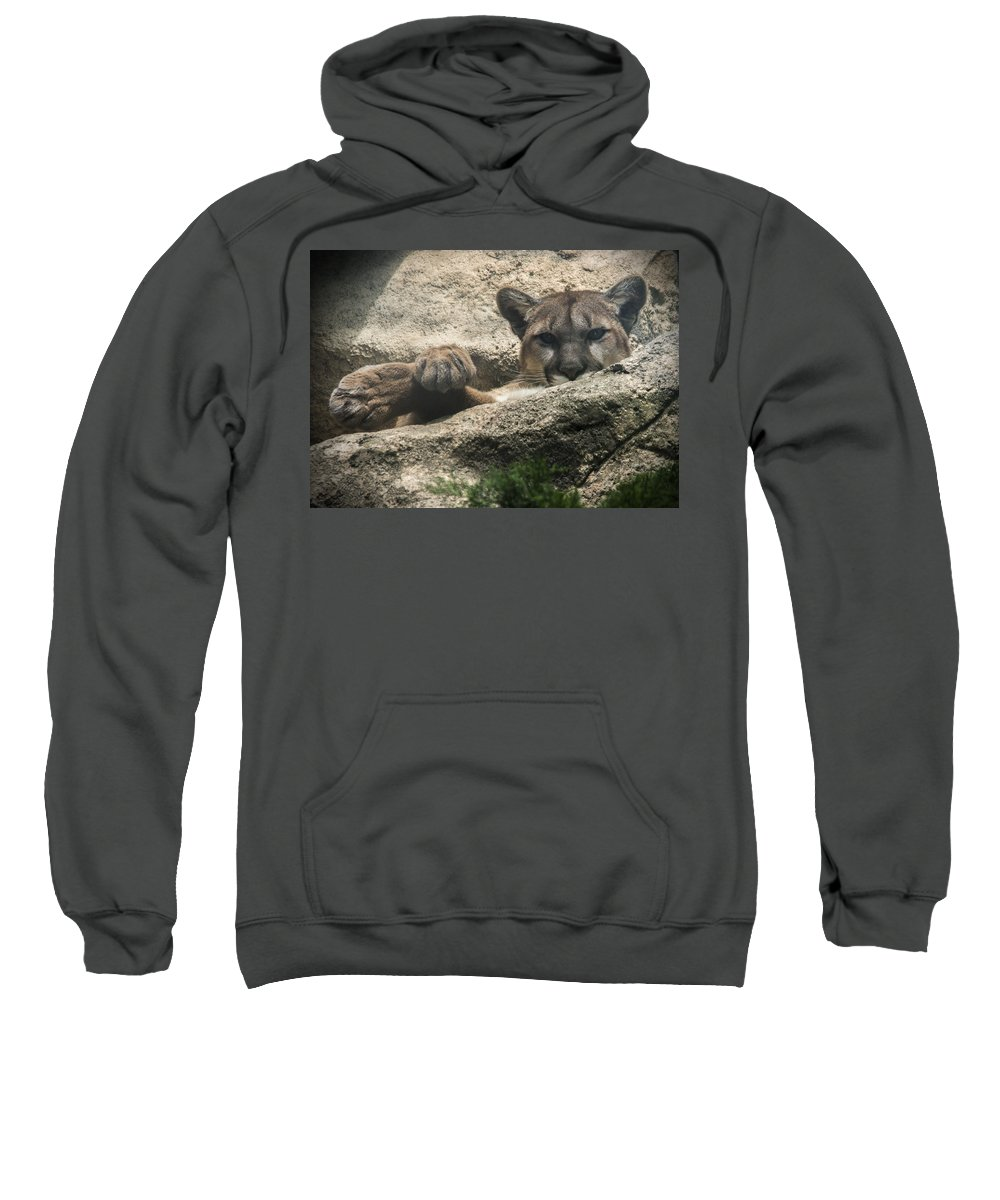Cougar Sweatshirt featuring the photograph Cougar Spotted Me by Jayne Gohr