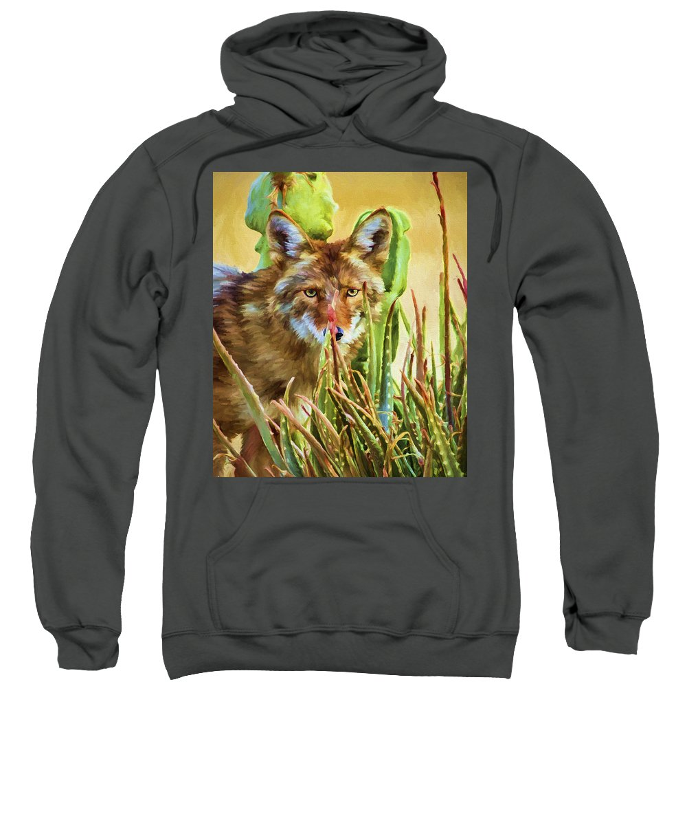 Coyote Sweatshirt featuring the painting Coyote In The Aloe by David Wagner