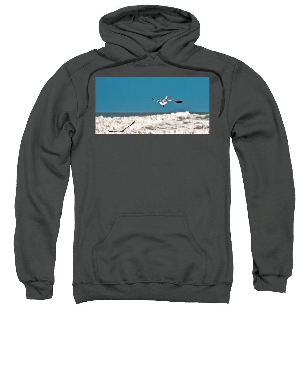 Seagulls Sweatshirt featuring the photograph Cracker Tracker by DigiArt Diaries by Vicky B Fuller