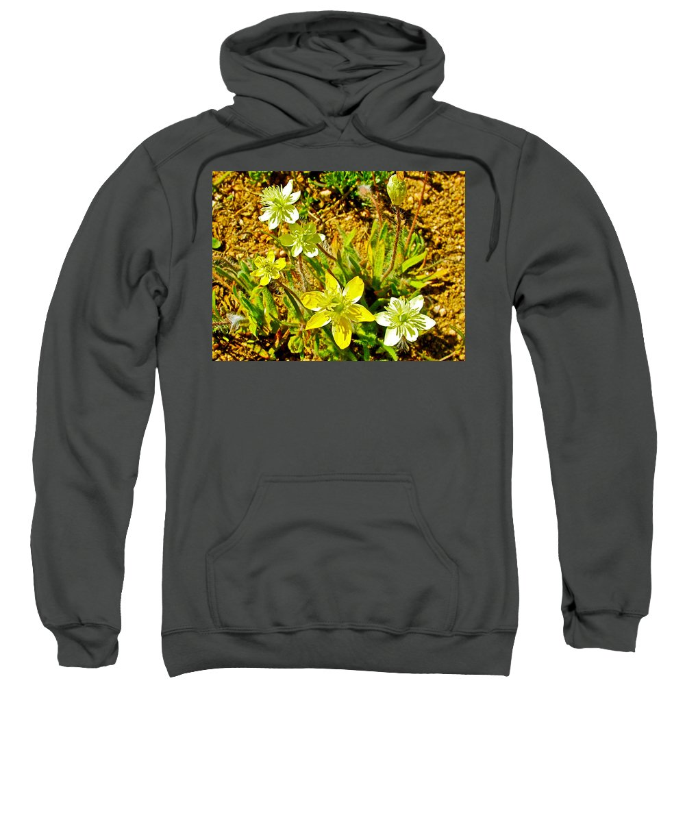 Cream Cups In Antelope Valley California Poppy Reserve Sweatshirt featuring the photograph Cream Cups In Antelope Valley California Poppy Reserve-california by Ruth Hager