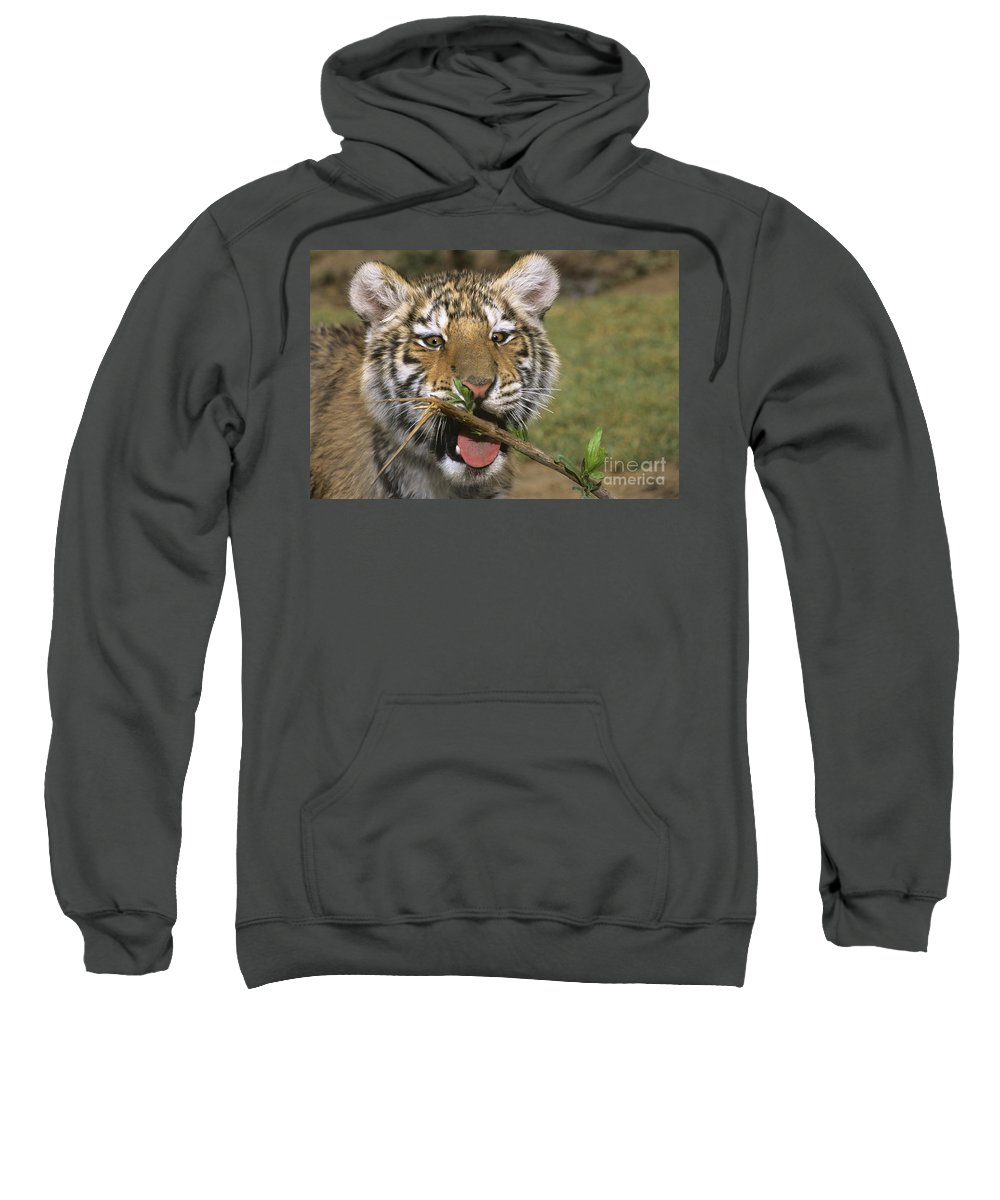 Siberian Tiger Sweatshirt featuring the photograph Crosseyed Siberian Tiger Cub Endangered Species Wildlife Rescue by Dave Welling