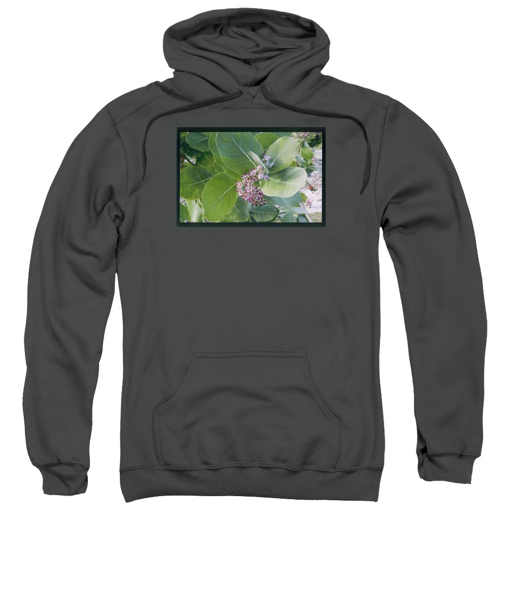 Giant Milkweed Sweatshirt featuring the photograph Crown Flower by Robert Nickologianis