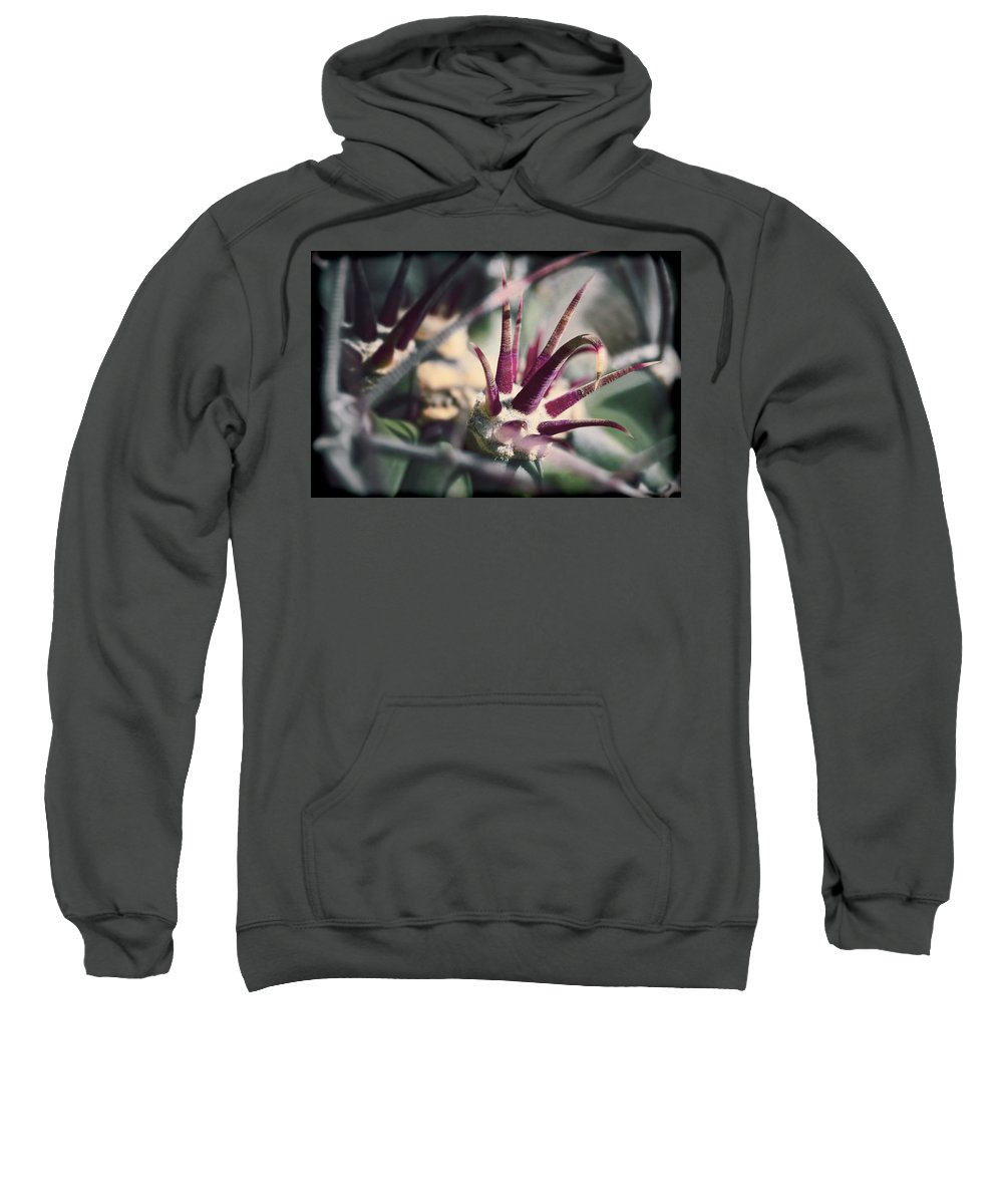 Cactus Sweatshirt featuring the photograph Crown Of Thorns by Kelley King