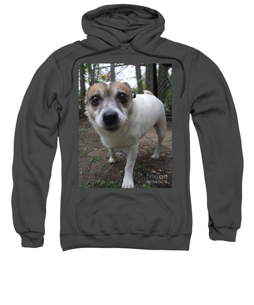 Dog Sweatshirt featuring the photograph Curious Jack by Minding My Visions by Adri and Ray