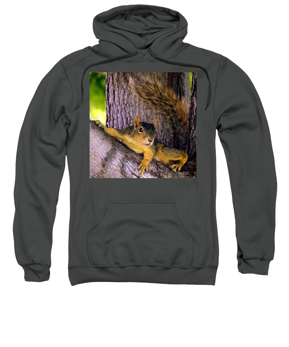 Nature Sweatshirt featuring the photograph Cute Fuzzy Squirrel In Tree Near Garden by Amy McDaniel