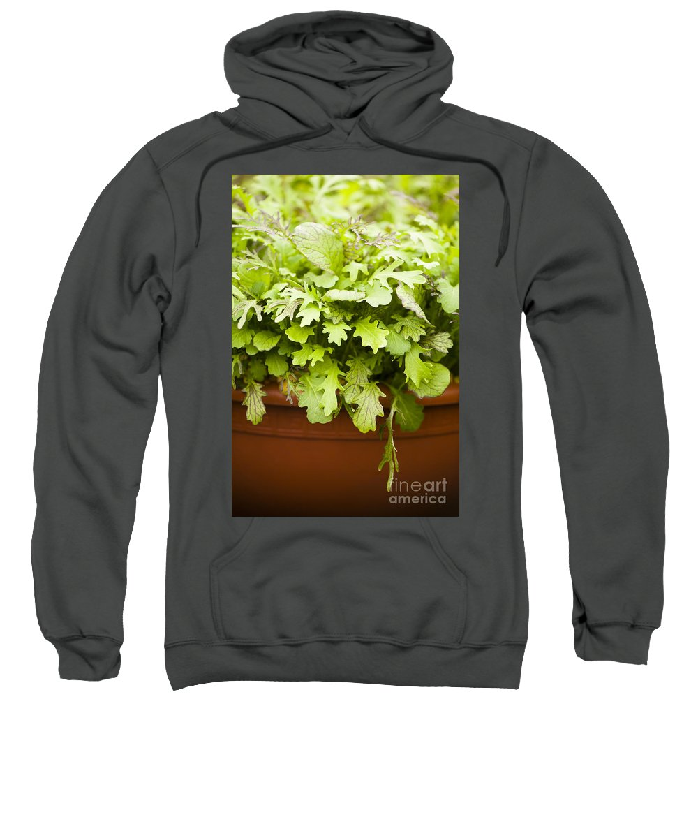 April Sweatshirt featuring the photograph Cutting The Mustard by Anne Gilbert