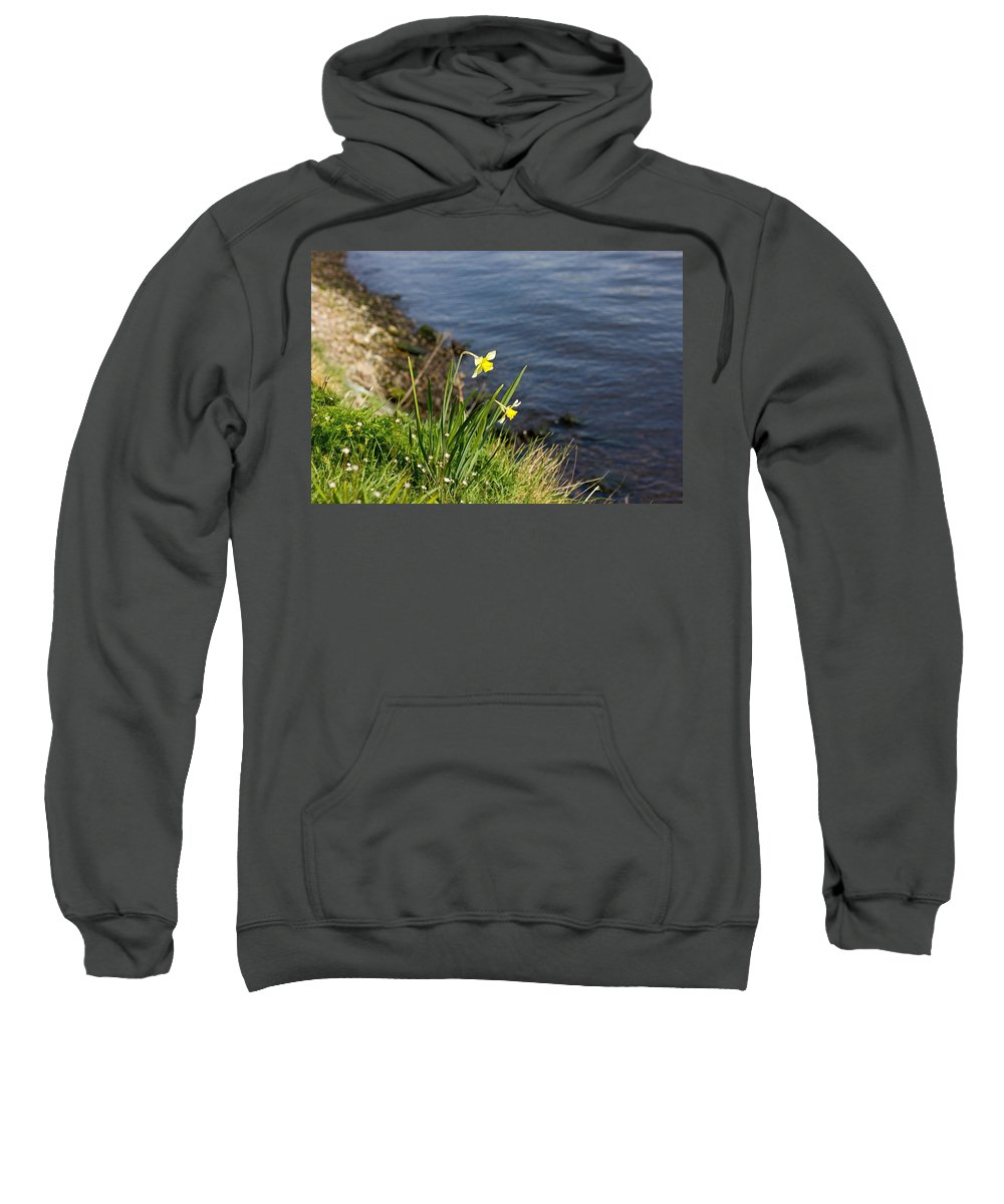 Nature Sweatshirt featuring the photograph Daffodil by Pati Photography
