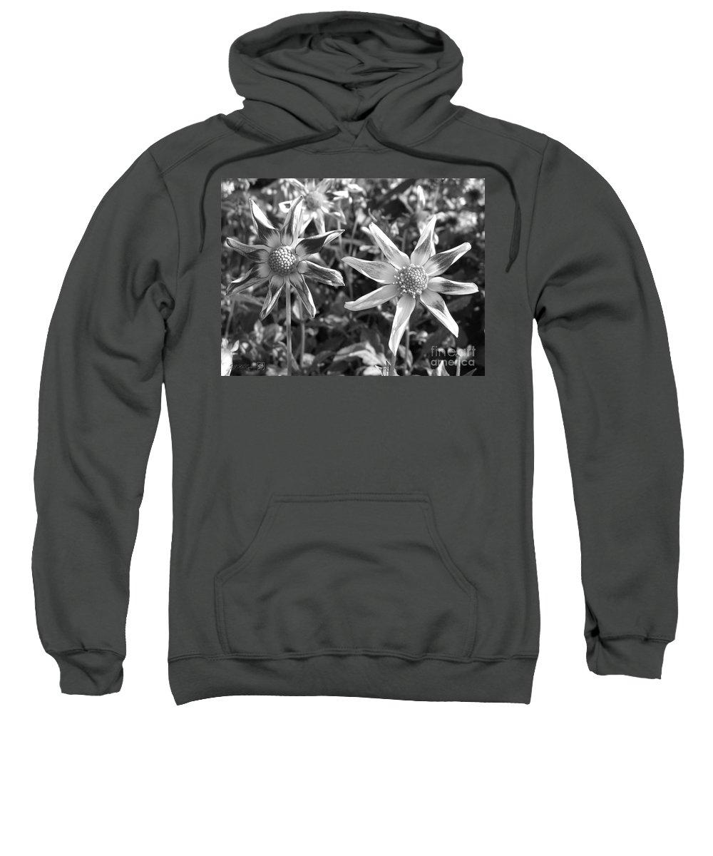 Dahlia Sweatshirt featuring the photograph Dahlia Named Amy's Star by J McCombie
