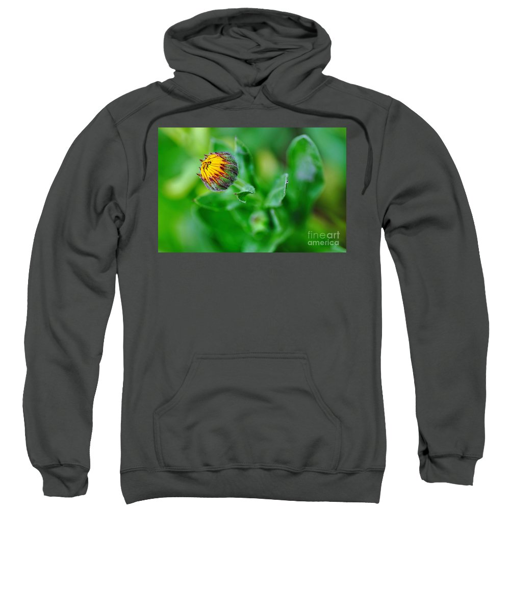 Photography Sweatshirt featuring the photograph Daisy Bud Ready To Bloom by Kaye Menner