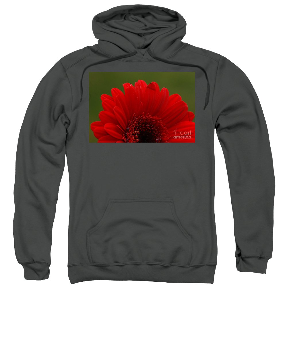 Red Sweatshirt featuring the photograph Daisy Red by Carol Lynch