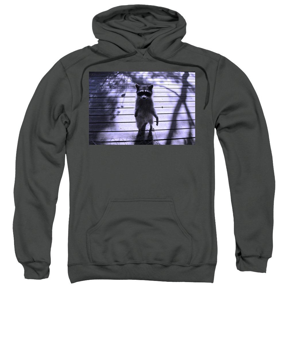 Animals Sweatshirt featuring the photograph Dancing In The Moonlight by Kym Backland