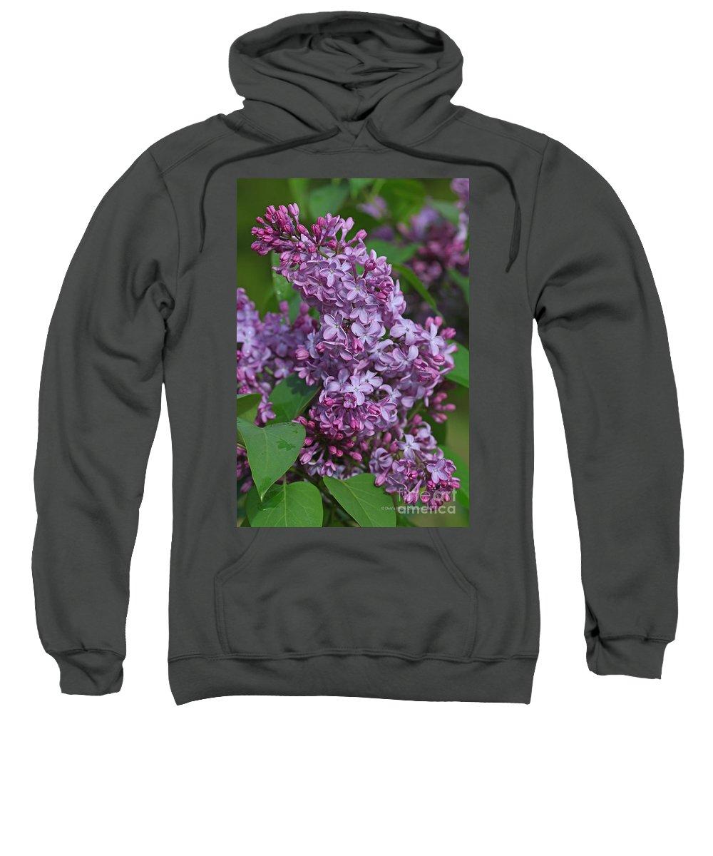Lilacs Sweatshirt featuring the photograph Dawns Lilacs by Deborah Benoit