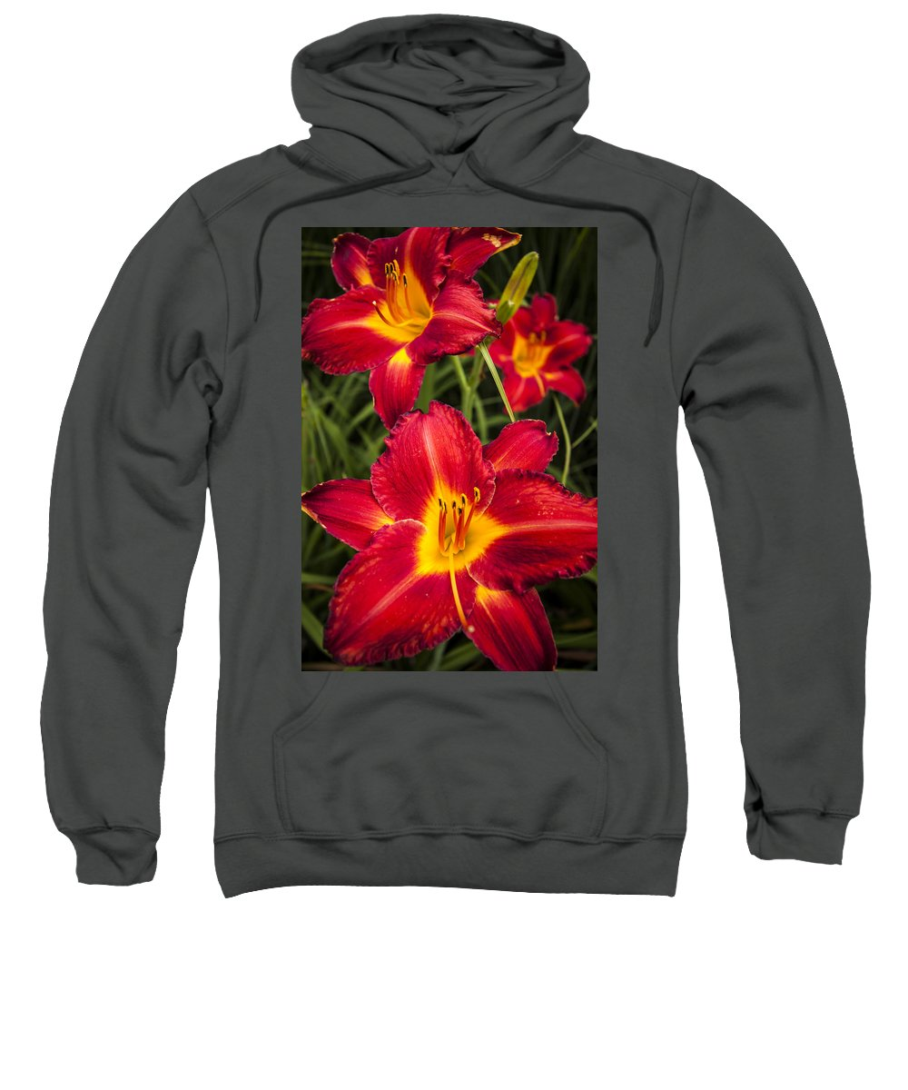 3scape Photos Sweatshirt featuring the photograph Day Lilies by Adam Romanowicz