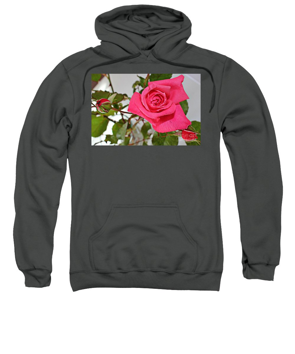 One Rose Sweatshirt featuring the photograph Deep Pink Rose - Summer - Rosebuds by Barbara Griffin