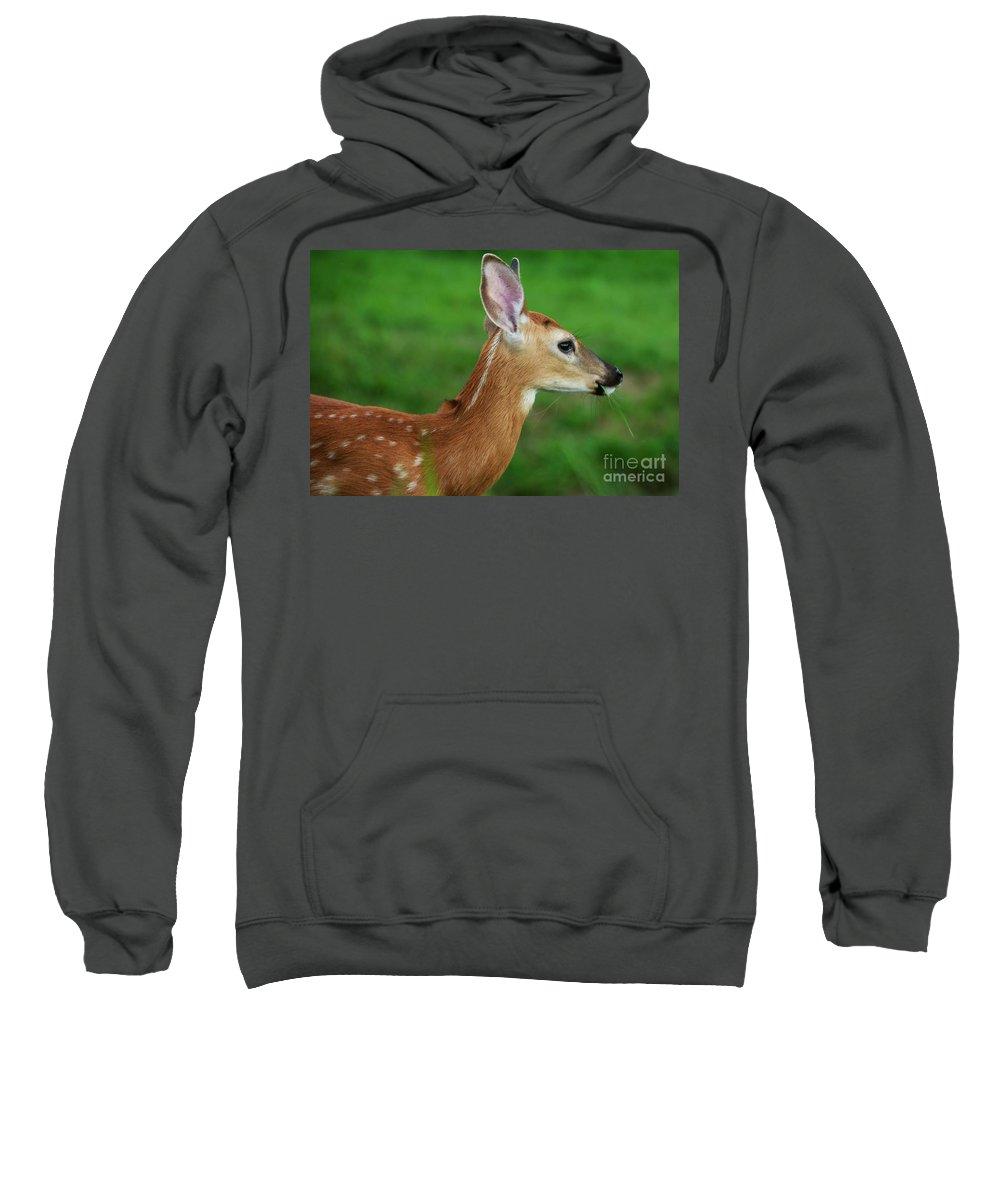 Deer Sweatshirt featuring the photograph Deer 16 by Cassie Marie Photography