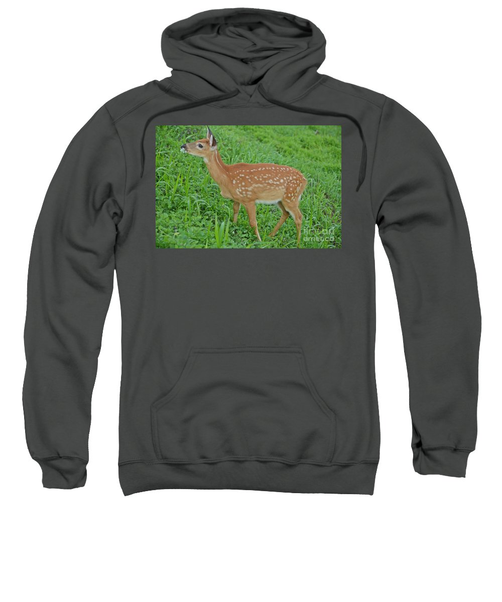 Deer Sweatshirt featuring the photograph Deer 19 by Cassie Marie Photography