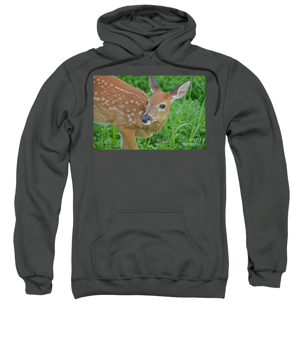 Deer Sweatshirt featuring the photograph Deer 21 by Cassie Marie Photography
