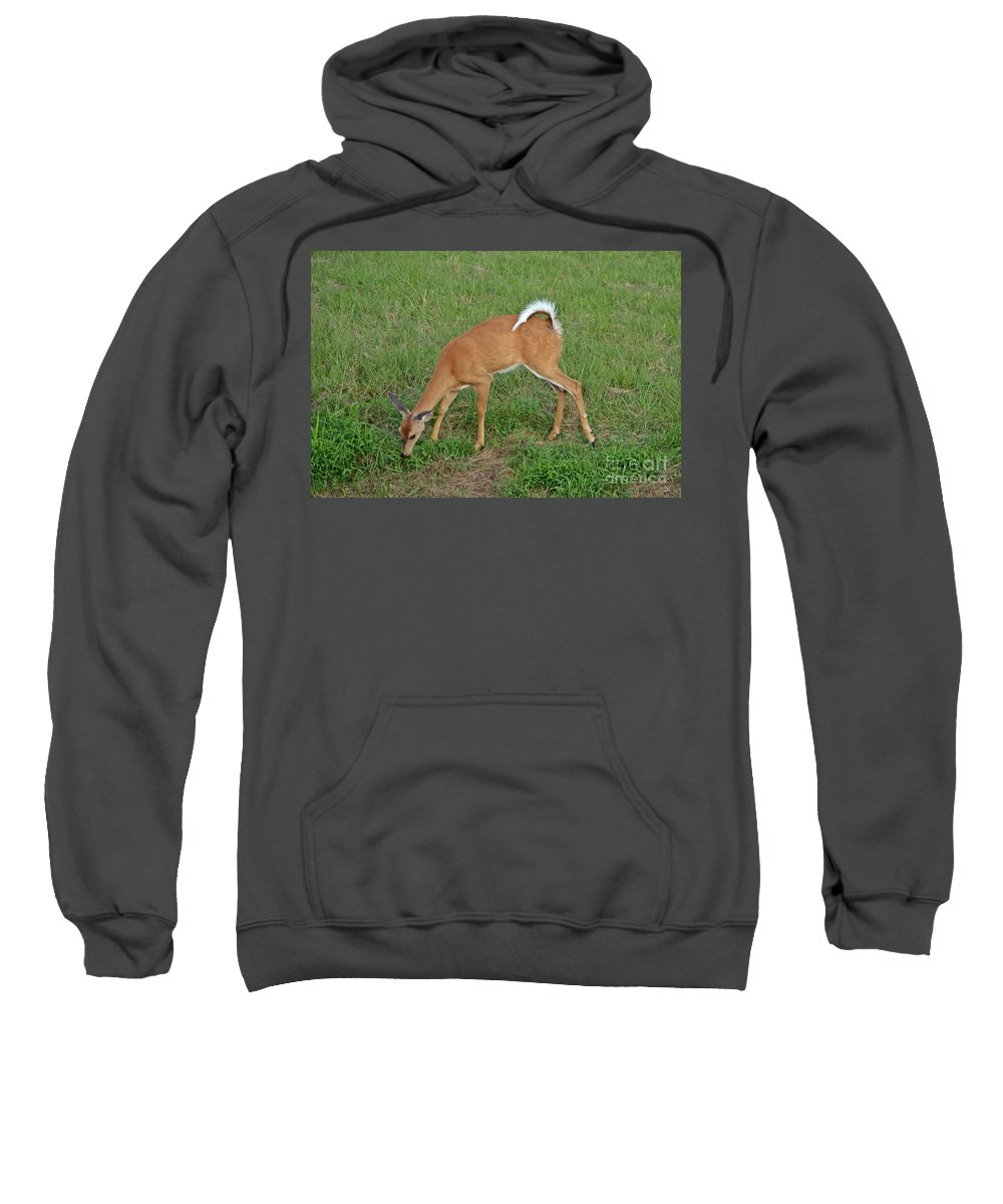 Deer Sweatshirt featuring the photograph Deer 23 by Cassie Marie Photography