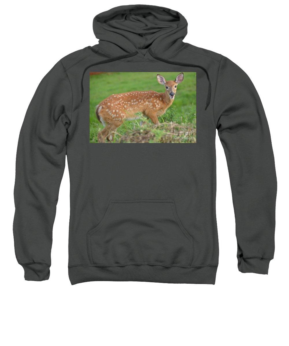 Deer Sweatshirt featuring the photograph Deer 24 by Cassie Marie Photography