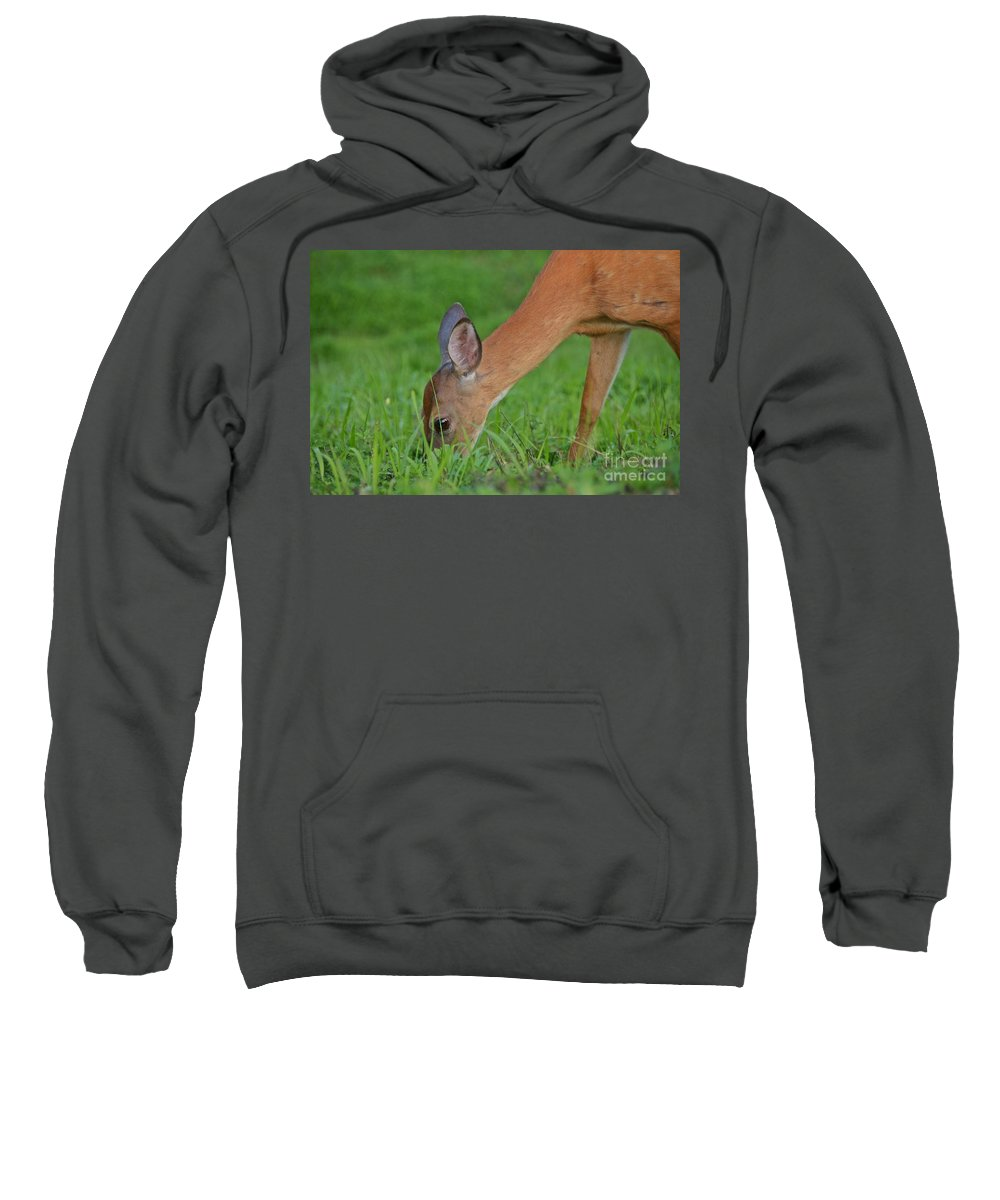 Deer Sweatshirt featuring the photograph Deer 25 by Cassie Marie Photography