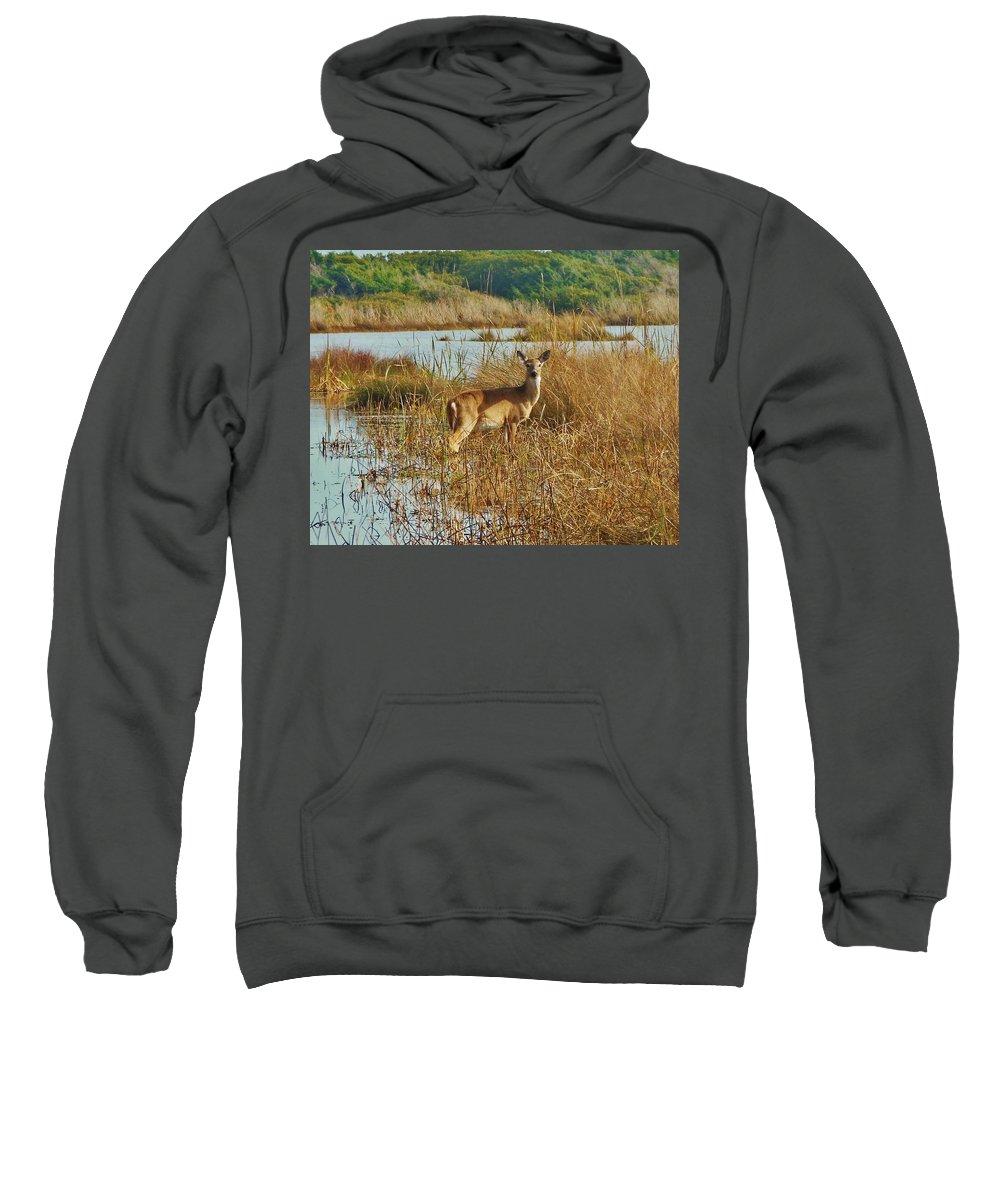 Mark Lemmon Cape Hatteras Nc The Outer Banks Photographer Subjects From Sunrise Sweatshirt featuring the photograph Deer The Point Hatteras Nc 2 12/5 by Mark Lemmon
