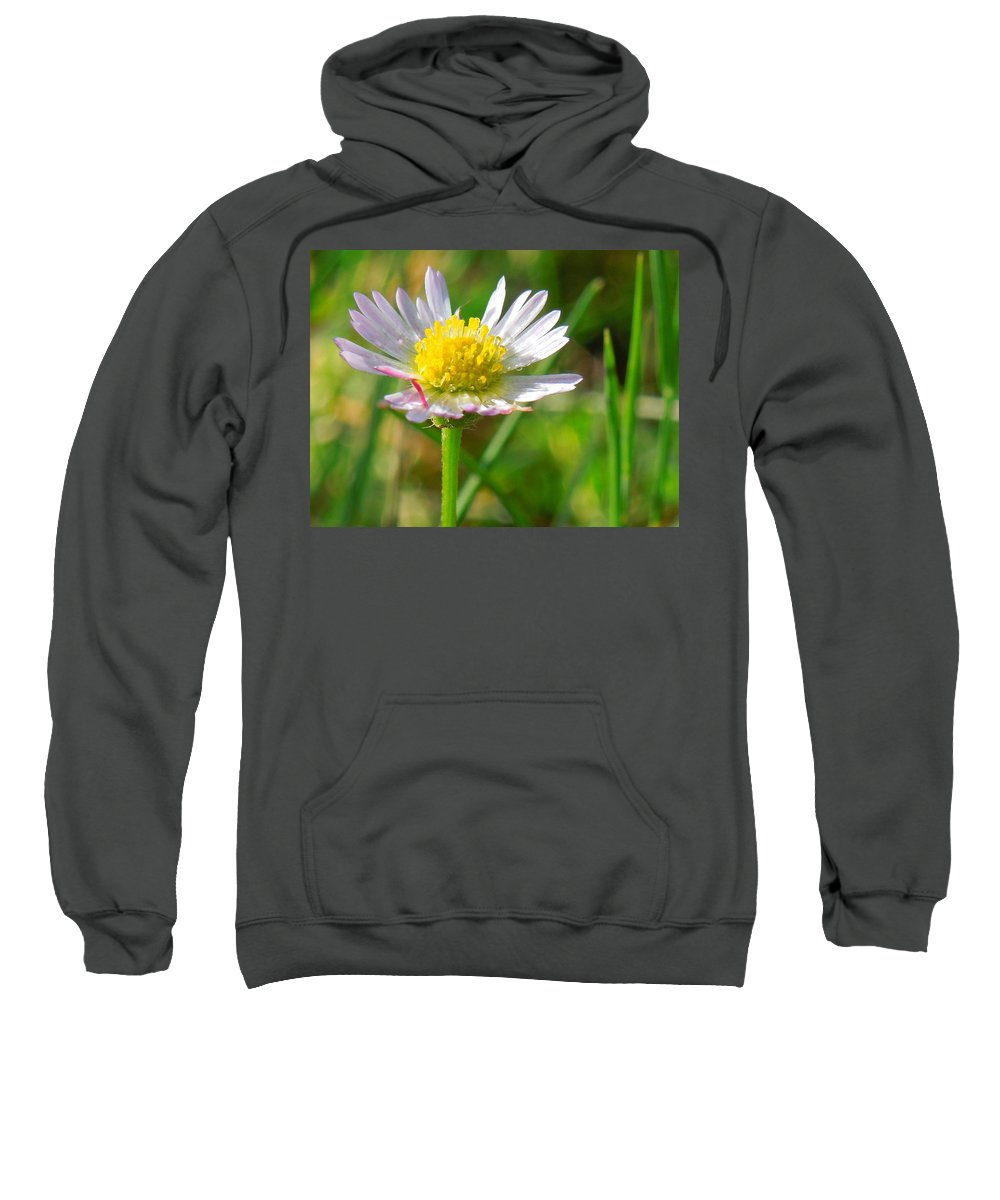Wildflower Sweatshirt featuring the photograph Delicate Daisy In The Wild by Donna Jackson