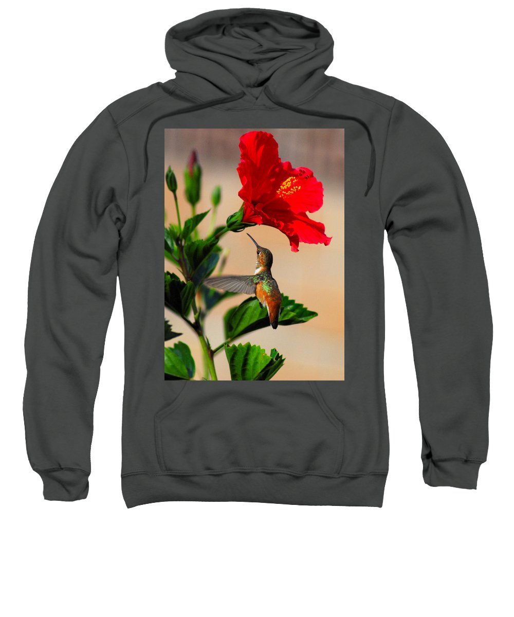 Allen's Hummingbird Sweatshirt featuring the photograph Delightful Hummer by Lynn Bauer
