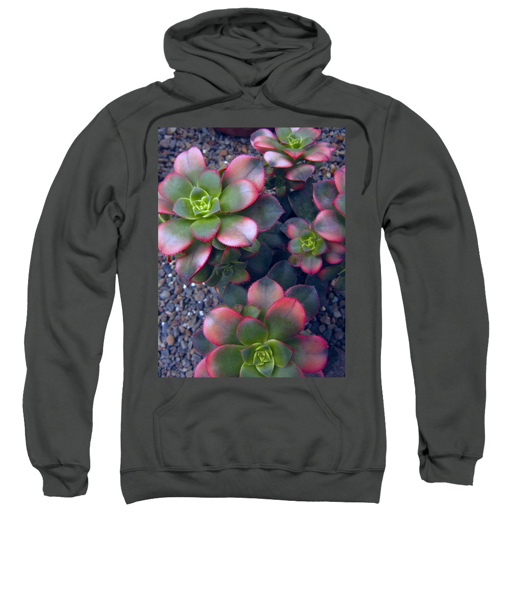 hens And Chicks Sweatshirt featuring the photograph Desert Succulents by Daniel Hagerman
