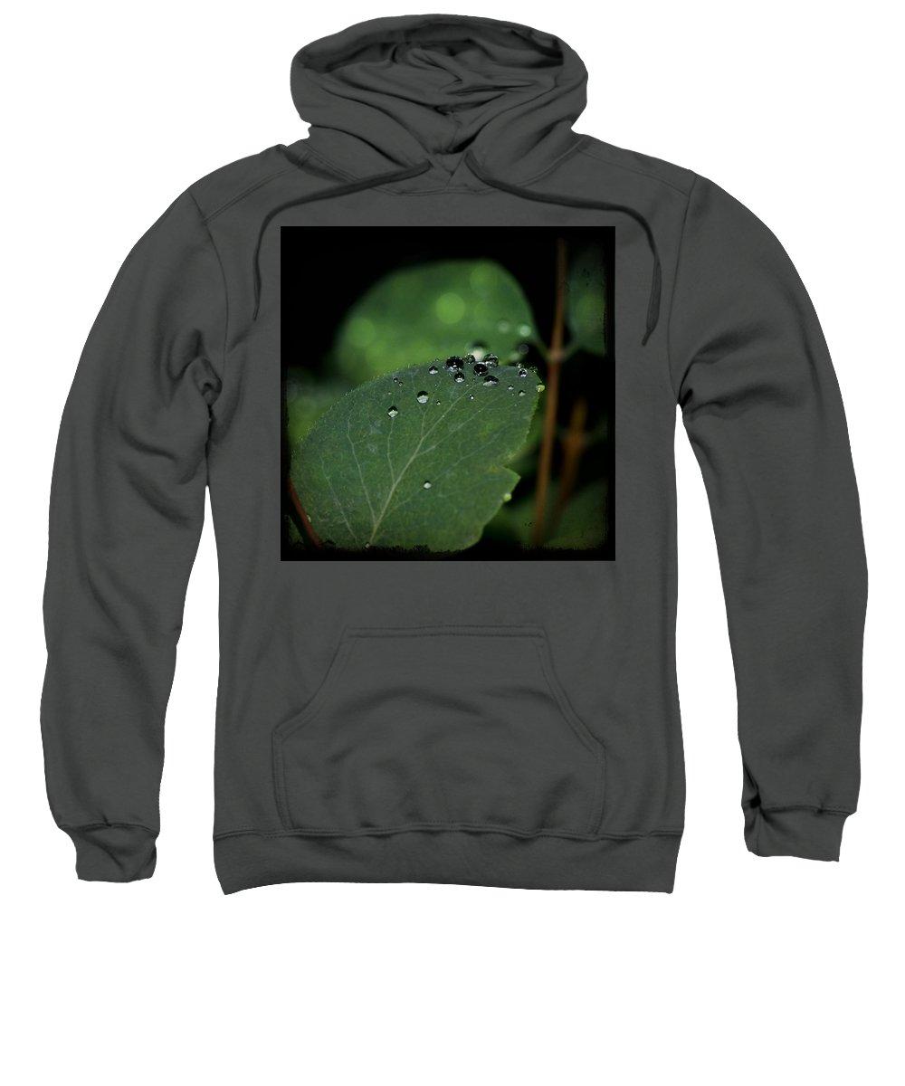 Lisa Knechtel Sweatshirt featuring the photograph Dewy Morn by Lisa Knechtel