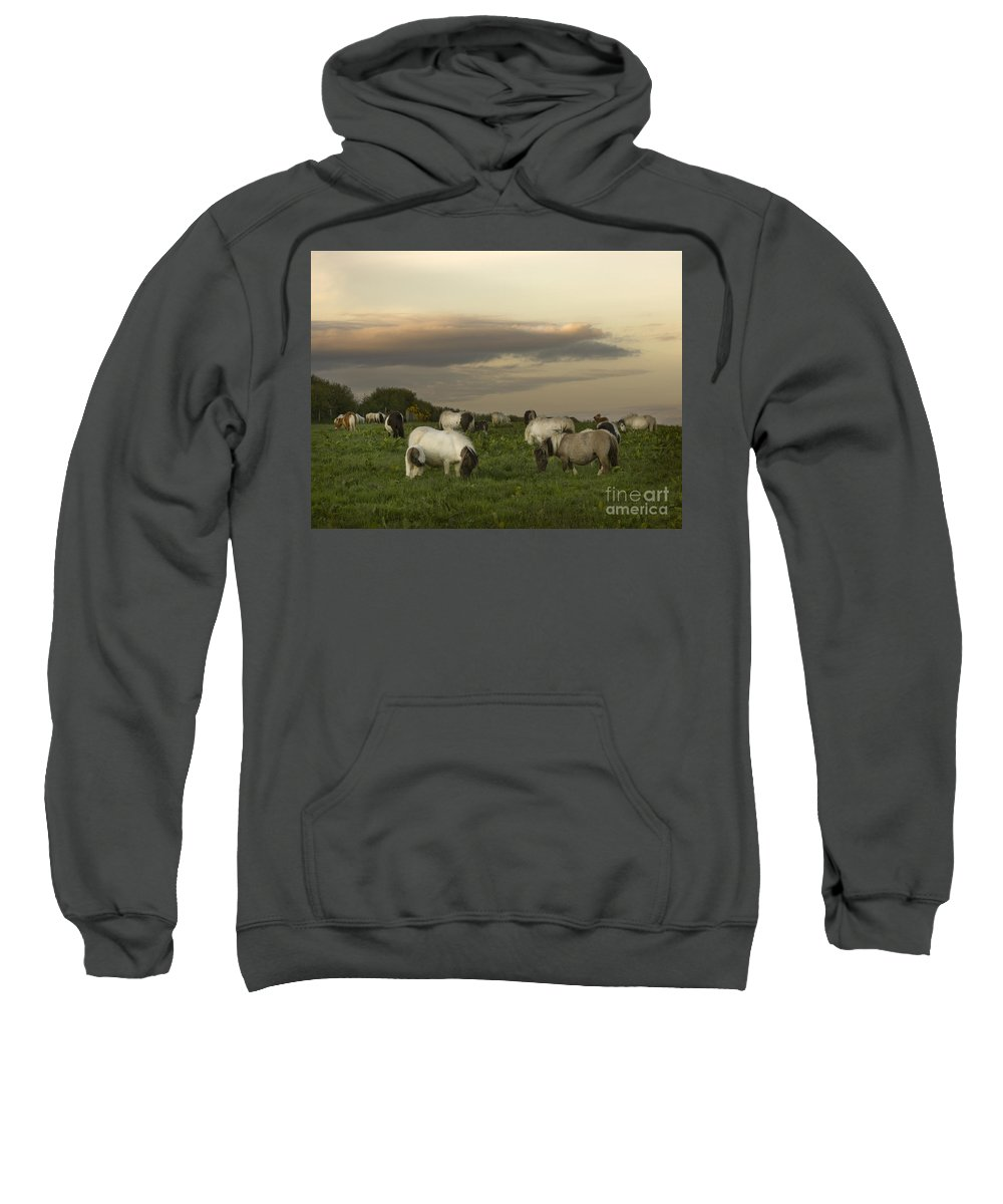 Ponies Sweatshirt featuring the photograph Dining Ponies by Angel Ciesniarska