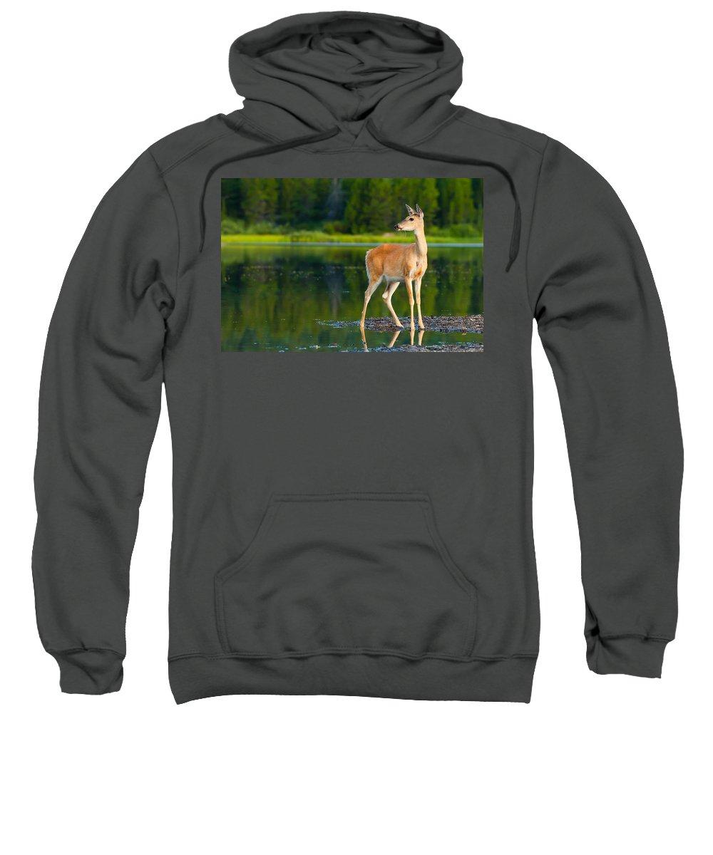 Animal Sweatshirt featuring the photograph Doe by Sebastian Musial