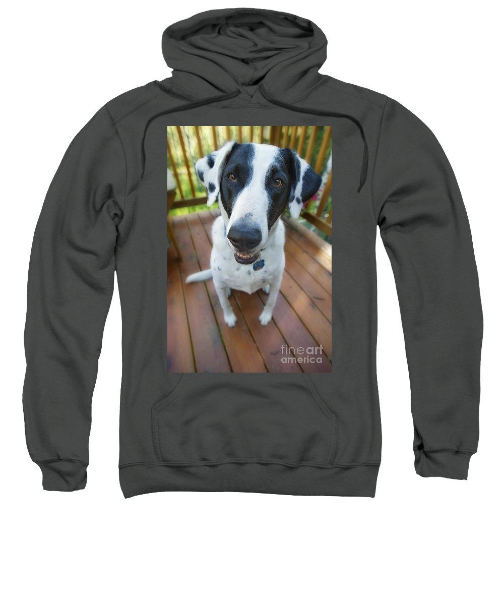 Animal Sweatshirt featuring the photograph Dog On A Wooden Deck by Wave Royalty Free