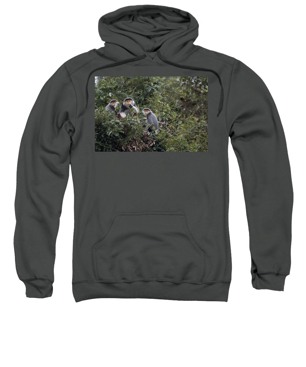 Cyril Ruoso Sweatshirt featuring the photograph Douc Langur Male And Females Vietnam by Cyril Ruoso