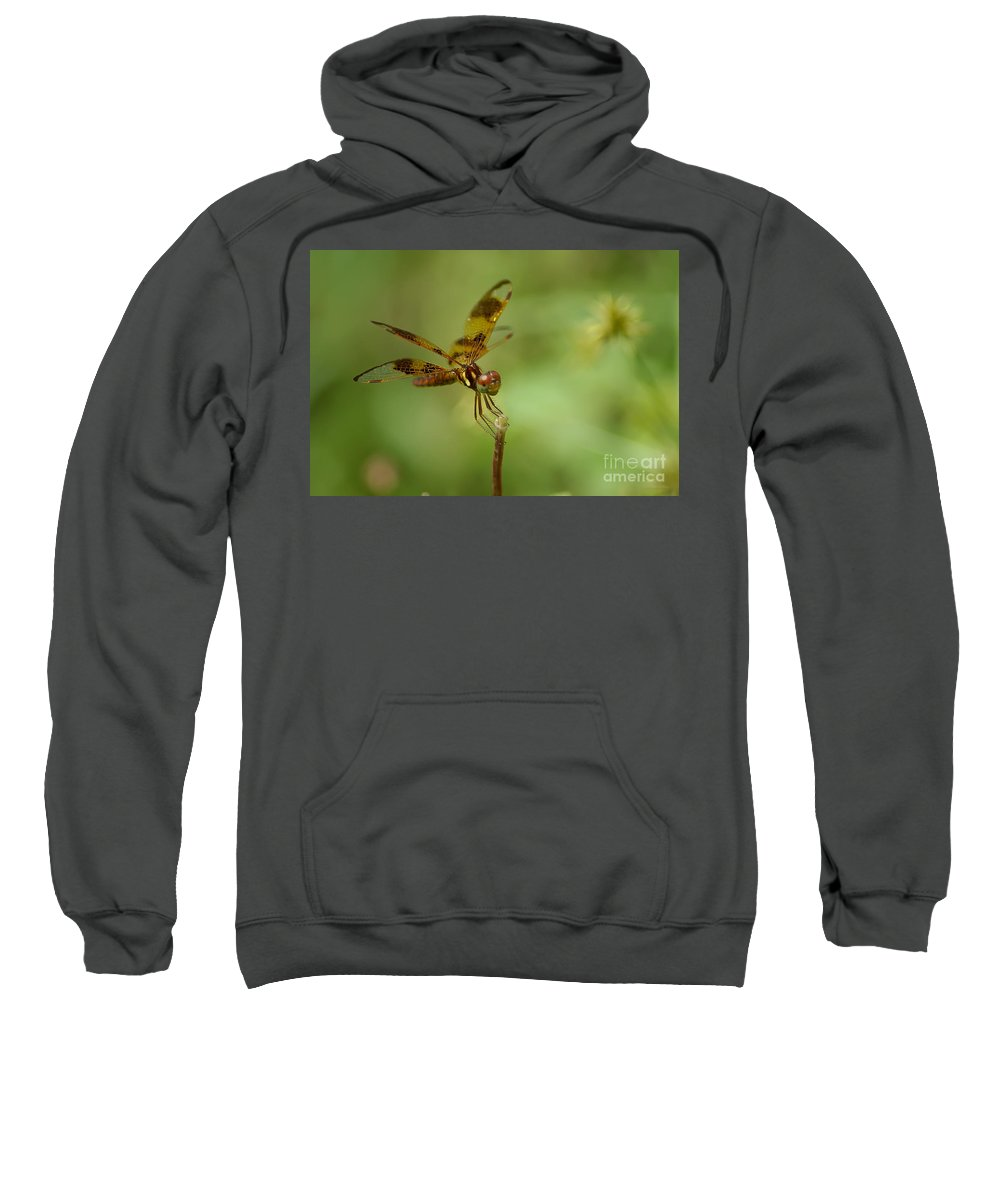 Dragonfly Sweatshirt featuring the photograph Dragonfly 2 by Olga Hamilton