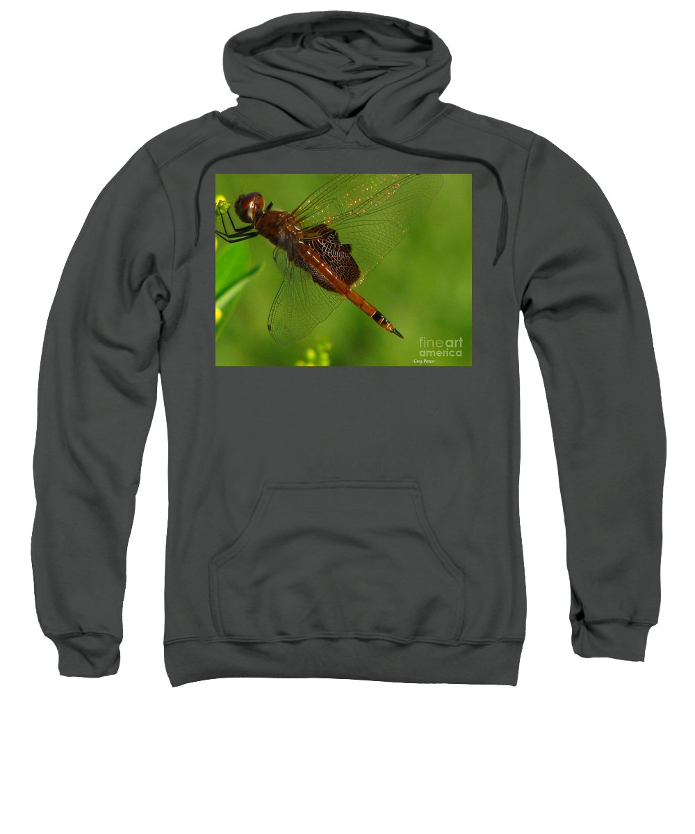 Art For The Wall...patzer Photographydragonfly Sweatshirt featuring the photograph Dragonfly Art 2 by Greg Patzer