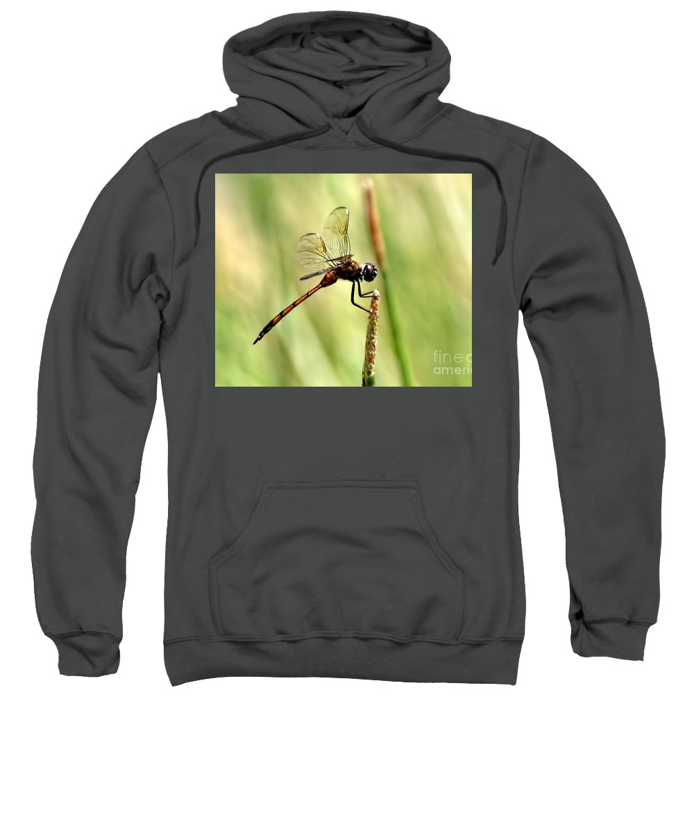 Dragonflies Sweatshirt featuring the photograph Dragonfly Gold by Richard Gripp
