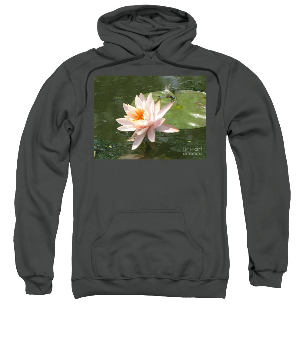 Dragon Fly Sweatshirt featuring the photograph Dragonfly Landing by Amanda Barcon